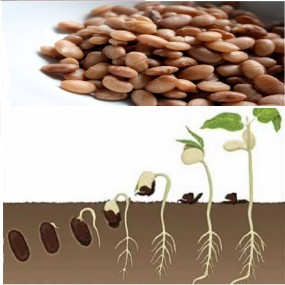 How Plant Grows(Science)