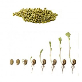 LEARN HOW SPROUT GROWS  (Science)